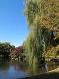 публика сада boston Стоковая Фотография