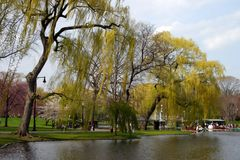 публика США сада boston общяя стоковые изображения rf
