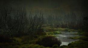 Пугающее болото Стоковые Изображения RF