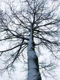 Пугающее дерево покрытое с снегом в зиме Стоковые Изображения