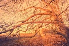 Пугающее дерево в волшебном восходе солнца Стоковые Фото