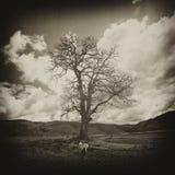 Пугающее дерево Стоковое Изображение