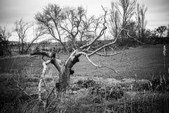 Пугающее поле дерева Стоковое Изображение RF
