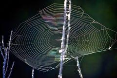 Пугающее Spiderweb на хеллоуин стоковые изображения