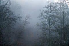 Пугающие силуэты деревьев без листьев на туманном и холодном autu стоковые фото