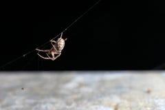 Пугающий акробат Стоковое Фото