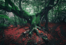 пугающий вал Мистический темный лес в тумане Стоковая Фотография RF