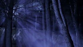 Пугающий лес с лучами лунного света акции видеоматериалы