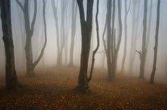 Пугающий страшный лес с загадочным туманом Стоковые Изображения RF