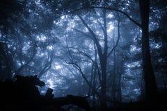 Пугающий туманный ненастный лес Стоковые Фото