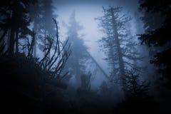Пугающий туманный ненастный лес Стоковое фото RF