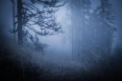 Пугающий туманный ненастный лес Стоковые Фотографии RF