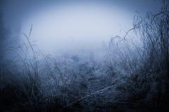 Пугающий туманный ненастный лес Стоковая Фотография