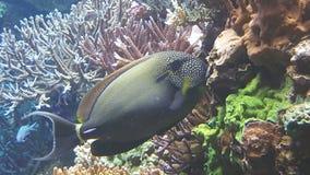 пузыри копируют вектор текста космоса seaweeds моря жизни иллюстрации рыб Стоковые Изображения