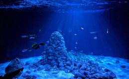 пузыри копируют вектор текста космоса seaweeds моря жизни иллюстрации рыб Стоковое Изображение RF
