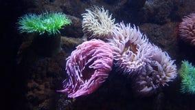 пузыри копируют вектор текста космоса seaweeds моря жизни иллюстрации рыб стоковое изображение