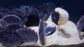 пузыри копируют вектор текста космоса seaweeds моря жизни иллюстрации рыб стоковые фотографии rf