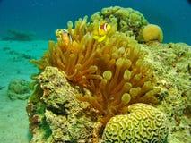 пузыри копируют вектор текста космоса seaweeds моря жизни иллюстрации рыб Стоковая Фотография RF