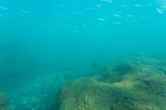 пузыри копируют вектор текста космоса seaweeds моря жизни иллюстрации рыб Стоковое Фото