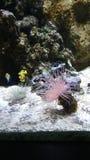 пузыри копируют вектор текста космоса seaweeds моря жизни иллюстрации рыб Стоковая Фотография