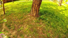 Пузыри мыла летают над травой около дерева в парке акции видеоматериалы