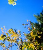 Пузыри с деревьями стоковые фото
