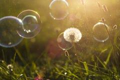 Пузыри луга и мыла Стоковая Фотография RF