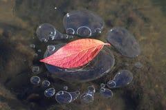 Пузыри льда Стоковая Фотография