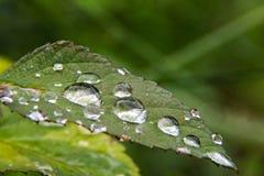 Пузырь воды на лист цветка Стоковое Изображение RF