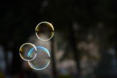 Пузырь мыла Стоковые Фото