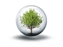 Пузырь с деревом иллюстрация штока