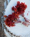 2 пука ягод стрелк-древесины на белой предпосылке Стоковые Изображения