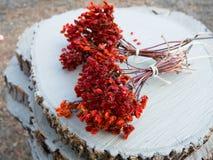 2 пука ягод guelder-Розы Стоковое фото RF