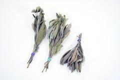 пуки высушили травы мудрые Стоковая Фотография