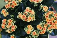 Пуки желтых цветков Стоковое Фото