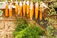 Пуки зрелых corns Стоковое Изображение RF