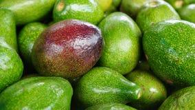 Пук авокадоов плодоовощ авокадоа одного плодоовощей зрелое красного между зелеными плодоовощами Стоковое фото RF
