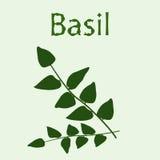 Пук базилика на салатовой предпосылке Стоковые Изображения