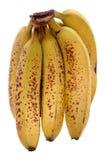 пук банана Стоковые Фото