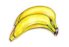 Пук бананов на белой предпосылке Иллюстрация акварели красочная плодоовощ тропический Ручная работа Стоковая Фотография RF