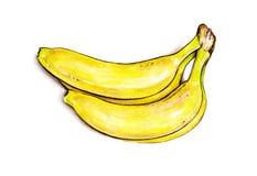 Пук бананов на белой предпосылке Иллюстрация акварели красочная плодоовощ тропический Ручная работа Стоковое Изображение RF