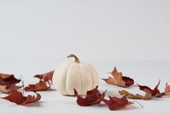 Пук белых тыкв Стоковые Изображения RF