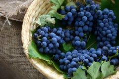 Пук виноградины Стоковое Изображение RF