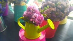 Пук высушенных цветков Statice Стоковое Изображение RF