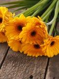 Пук желтых маргариток Стоковая Фотография RF