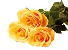 Пук желтых роз изолированный на белизне Селективный фокус Стоковые Изображения