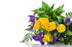Пук желтых тюльпанов и голубых радужек на белой предпосылке Стоковые Фотографии RF