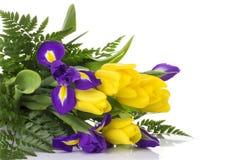 Пук желтых тюльпанов и голубых радужек на белой предпосылке Стоковое фото RF