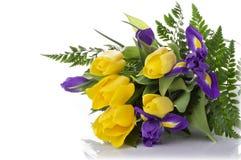 Пук желтых тюльпанов и голубых радужек на белой предпосылке Стоковое Изображение