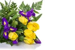 Пук желтых тюльпанов и голубых радужек на белой предпосылке Стоковое Фото